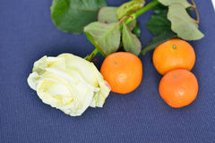 Three ripe tangerines and white rose Stock Photos