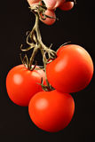 Three ripe tomatoes hanging from above on black Stock Images