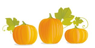 Three ripe yellow pumpkins Royalty Free Stock Photography