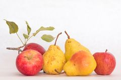 Three ripe yellow skinned pears and red apples, fresh organic beautiful studio shot with stem and green leaves royalty free stock photo