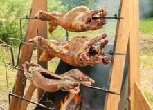 Three roasted pig bodies closeup shot, selective focus. Three roasted pig bodies closeup shot, selective stock images