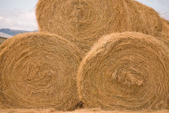 Three Rolls of Hay Stock Photography