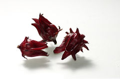 Three roselles Stock Images