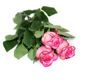 Three roses. Are isolated on a white background Royalty Free Stock Photos
