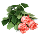 Three roses. Are isolated on a white background Stock Images