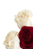 Three roses Stock Images