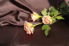 Three Roses Stock Image