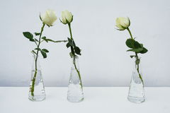 Three roses Stock Photos