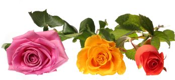Three roses Royalty Free Stock Images