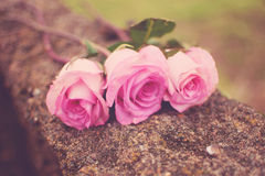 Free Three Roses Royalty Free Stock Photography - 30046307