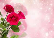 Three Roses. Three crimson roses on a festive background. Space for text Stock Photography