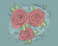 Three roses drawing Stock Images