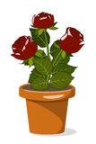 Three roses in flowerpot Stock Images