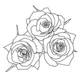 Three Roses in hand drawn style Royalty Free Stock Photography
