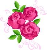 Three Roses Illustration. Three Pink Roses Flower Vector Illustration Stock Photos