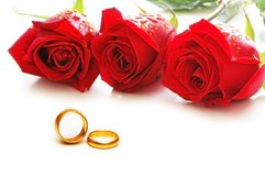 Three roses and rings isolated on the white. Three roses and rings  isolated on the white Stock Images