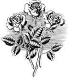 Three roses with their stems and leaves. Three roses with their stems and leaves in Stock Photos