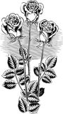 Three roses with their stems and leaves. Three roses with their stems and leaves in vector Stock Images