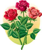 Three roses with their stems and leaves. Three roses with their stems and leaves in vector Stock Photo