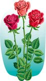 Three roses with their stems and leaves. Three roses with their stems and leaves in vector Royalty Free Stock Images