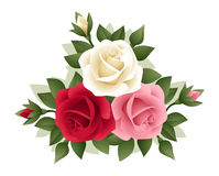 Three roses of various colors. Royalty Free Stock Photo