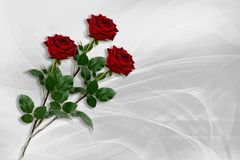Three red roses lie on a gray-white background. stock images