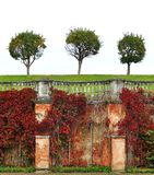 Three round autumn green trees in the background of a white sky on a green grass. Old brick wall vector illustration