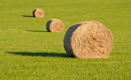 Three round hay bales in a row on green grass Royalty Free Stock Photography