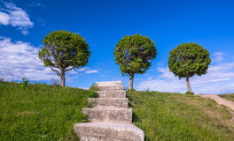 Three rounded trees and old stone stair in green grass to blue cloudy sky Royalty Free Stock Photos