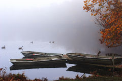 Three Row Boats in the Fog. A pond, three boats and flock of geese in the morning fog. Connetquot River State Park Preserve, Long Island, New York Royalty Free Stock Image
