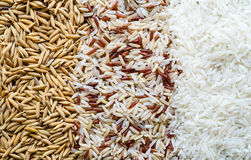 Three rows of rice. Royalty Free Stock Photo