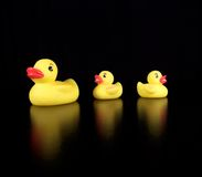 Three Rubber Duckies Stock Photos