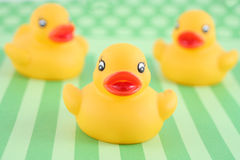 Three rubber duckies Royalty Free Stock Photo