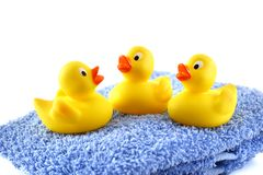 Three rubber ducks. On a blue towel Stock Images