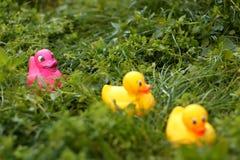 Three Rubber Ducks Stock Image