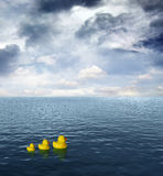 Three Rubber ducks Royalty Free Stock Images