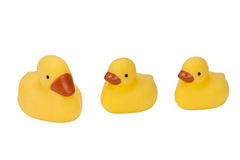 Three Rubber Ducks - Isolated. Line of three yellow Rubber Ducks - Isolated Stock Image
