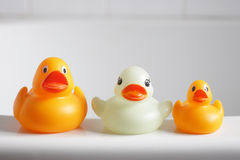 Three rubber ducks Royalty Free Stock Photography