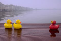 Three rubber ducks near the sea stock photos