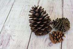 Three Rustic Pinecones on a White Barn Board Floor Royalty Free Stock Images