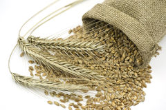 Three Rye Ears  Beside Liying Sack  with Grain Stock Image