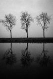 Three's. Art portrait of 3 tree's with a reflection in the water royalty free stock image