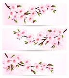 Three sakura branch banners. Royalty Free Stock Images
