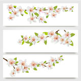Three sakura branches banners. Royalty Free Stock Photo