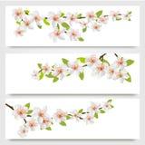 Three sakura branches banners. Royalty Free Stock Photo