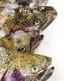 Three Salmon Heads. Three uncooked fresh salmon heads on ice in a market Stock Photo