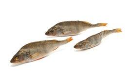 Three salted fish Stock Photo
