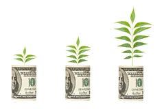 Saplings growing from dollar bill. Three saplings growing from dollar bill royalty free stock photos