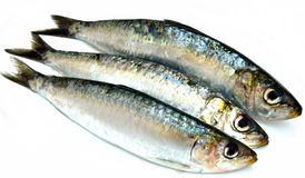 Three sardines Royalty Free Stock Photos