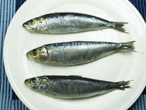 Three sardines Stock Photography